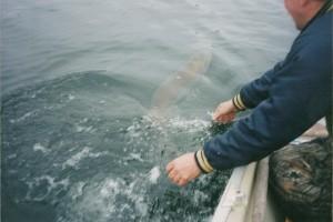 Old fish pics 028